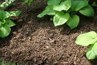 Blue Hen Natural Mulch
